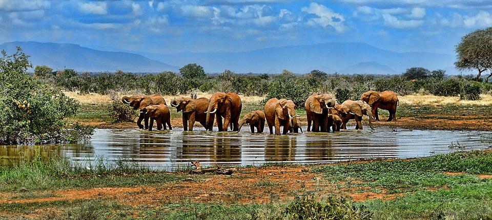L'Afrique, destination de rêve.